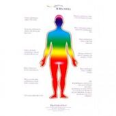 《香氛市集》Aura-Soma 海報 - 人體脈輪圖(站姿)