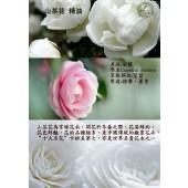 《香氛市集》山茶花精油10ml