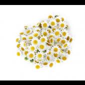 《香氛市集》VISAKHA 羅馬洋甘菊純精油20件一組