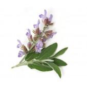 《香氛市集》專業級/芳療級單方精油-快樂鼠尾草10ml